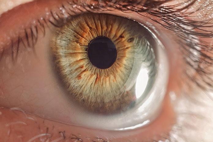 W jaki sposób zbudowane jest oko